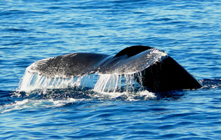 Cabo Whale Watching | Private Whale Watching in Cabo San Lucas